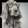 Chien à lunettes…