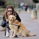 Devenir famille d'accueil d'un chien guide d'aveugle : une mission pleine de sens !