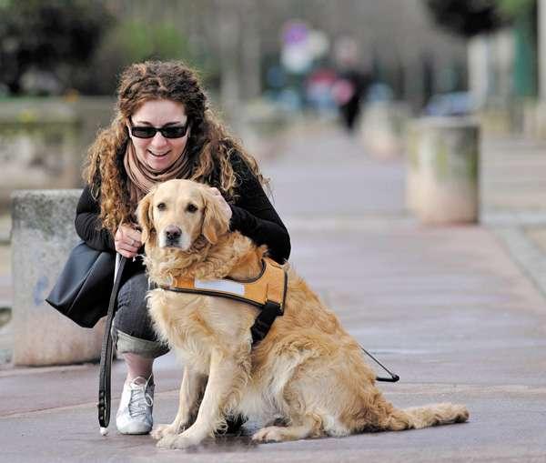 Devenir famille d'accueil d'un chien guide d'aveugle : une